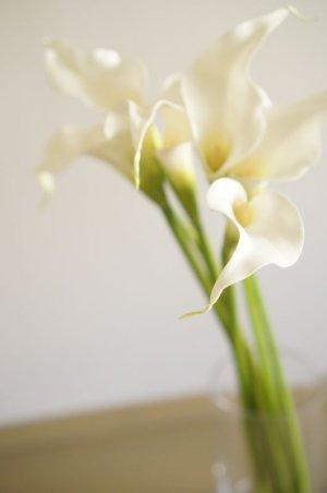 画像3: 【造花】カラー(ホワイト) 53cm7本セット