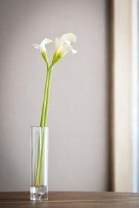 【造花】カラー(ホワイト) 53cm3本セット